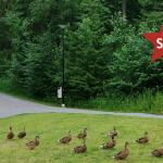 Kuva Korson Ankkapuistosta ja kuvan päälle lisättynä SKP:n logo ja viereen valkoisella teksti 'Korso'.